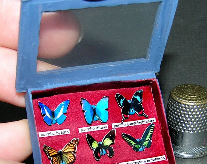 Butterfly display, Paperminis, Bastelkit of paper in miniature for the Dollhouse, the doll house, Dollhouse Miniatures # 40001