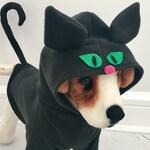 Black cat costume- Cat costume- Dog halloween costume by FiercePetFashion