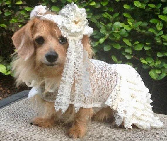 Dog Wedding Dress With Veil Dog Wedding Dress Wedding Dress Etsy