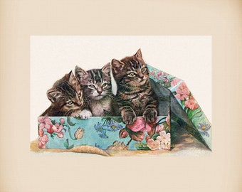 Kittens In A Box New 4x6 Vintage Postcard Image Photo Print FN36