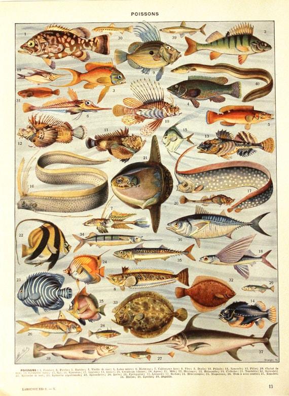 Fisch Plakat 1936 Vintage Druck Vintage Küche Dekor | Etsy