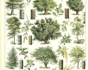 Botanical art Tree poster 1936 Vintage botanical poster vintage French country decor classroom decor Picture of trees pictures of gardens