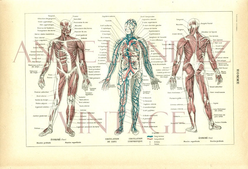 Großzügig Grau Anatomie Kostenlos Online Sehen Fotos - Anatomie Von ...