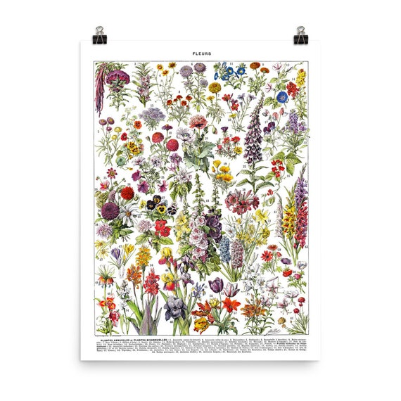 18x24 Large Botanical poster of flowers Vintage Annual flowers print Botanical art for French country decor Classroom decor floral wall