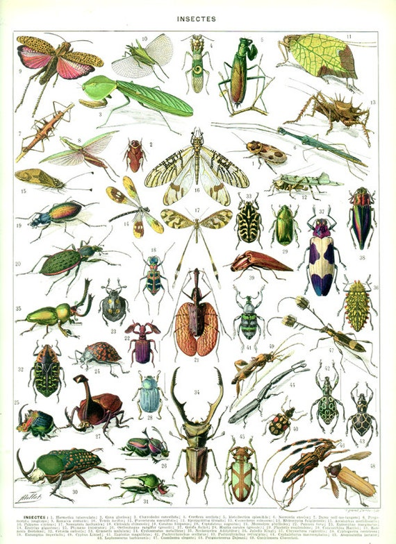 Insects R Gone Insects print 1936 Vin...