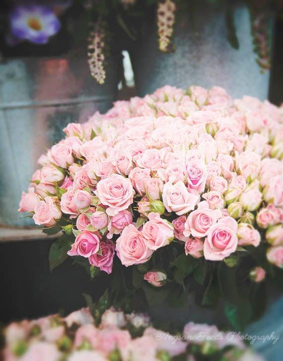 Paris Pink Rose Photograph French Rose Bouquet Print Paris Etsy