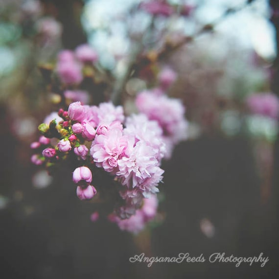 Pink Flower Photograph Cherry Blossom Photo Spring Flower Buds Etsy