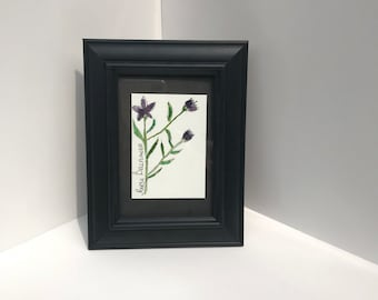 Original watercolor of a Marsh Bellflower wildflower herbalism painting ATC ARTIST Trading Card