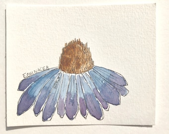Postcard- Original pen and ink and watercolor on watercolor paper of an Echinacea wildflower herbalism drawing