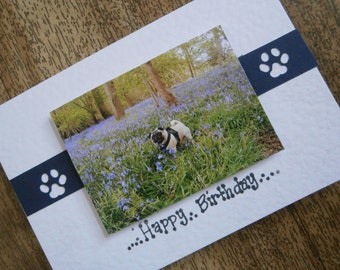 Pug in a bluebell wood.Pug Birthday card individually made from an original photograph