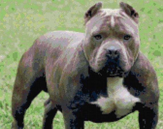Gray Pit Bull Dog Counted Cross Stitch Pattern Chart PDF Download by Stitching Addiction