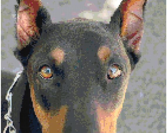 Doberman Pinscher Dog Puppy Counted Cross Stitch Pattern Chart PDF Download by Stitching Addiction