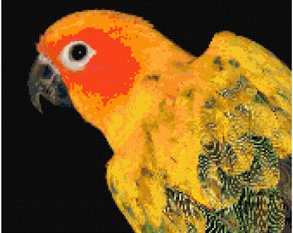 Sun Conure Parakeet Counted Cross Stitch Pattern Chart PDF Download by Stitching Addiction