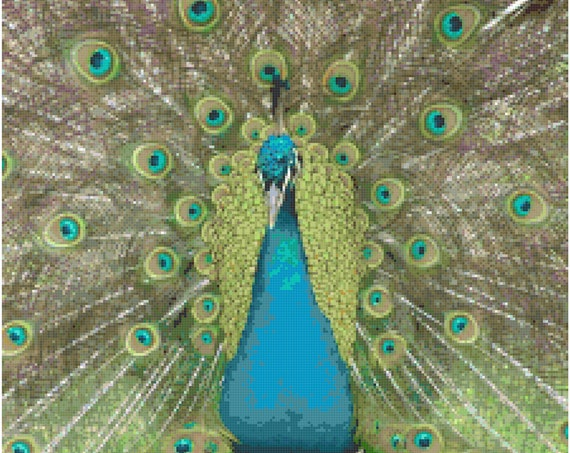 Magnificent Peacock Counted Cross Stitch Pattern Chart PDF Download by Stitching Addiction