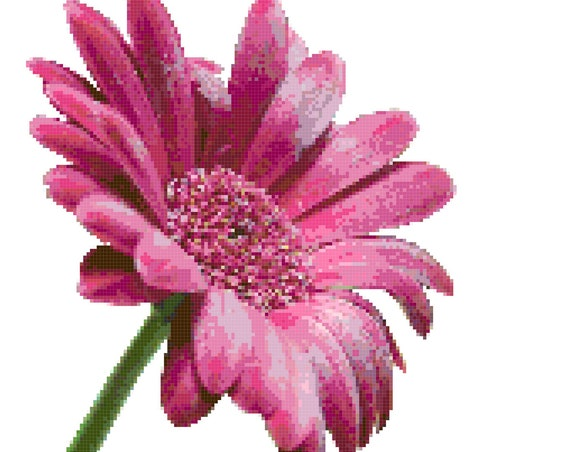 Pink Gerber Daisy Counted Cross Stitch Pattern Chart PDF Download by Stitching Addiction