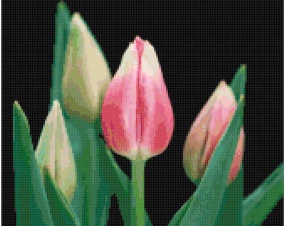 Pink Tulips Counted Cross Stitch Pattern Chart PDF Download by Stitching Addiction