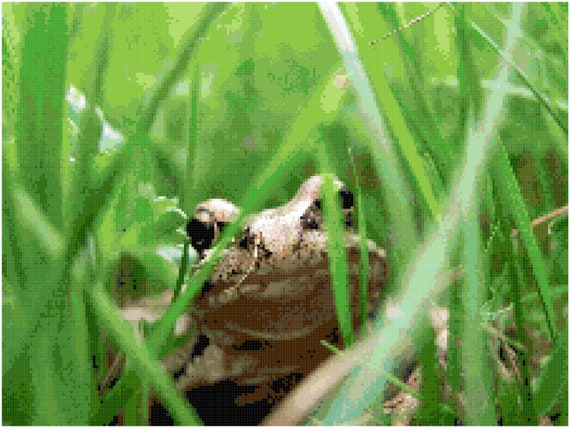 Frog in the Grass Counted Cross Stitch Pattern Chart PDF Download by Stitching Addiction