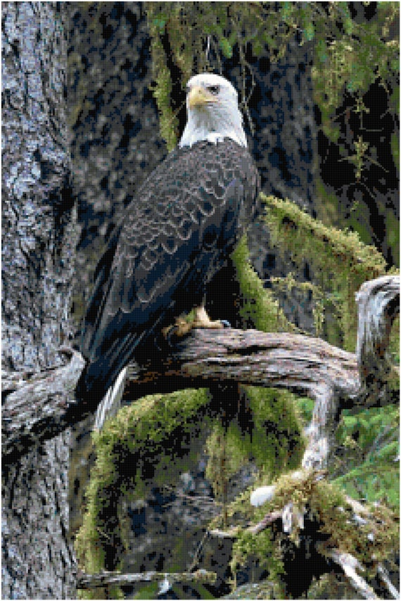 Regal Bald Eagle in Forest Natural Habitat Counted Cross Stitch Pattern Chart PDF Download by Stitching Addiction