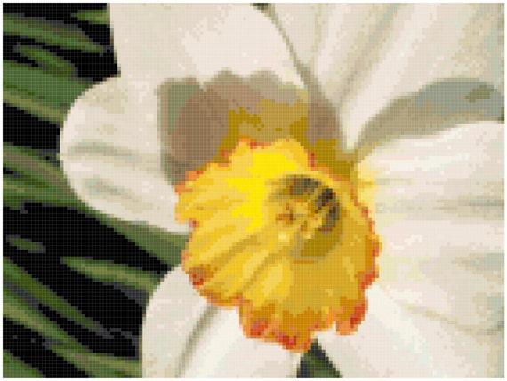 Daffodil Counted Cross Stitch Pattern Chart PDF Download by Stitching Addiction