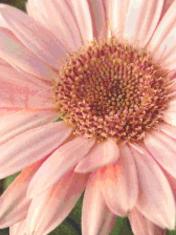 Pink Daisy Counted Cross Stitch Pattern Chart PDF Download by Stitching Addiction