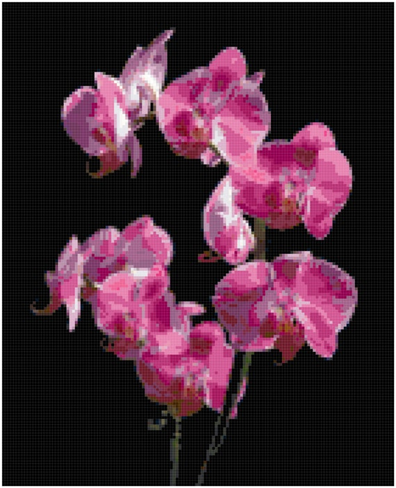 Orchid Counted Cross Stitch Pattern Chart PDF Download by Stitching Addiction