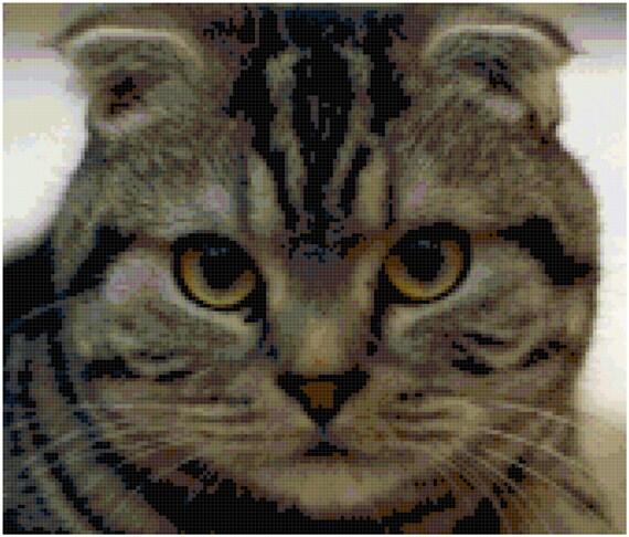 Scottish Fold Kitten Cat Counted Cross Stitch Pattern Chart PDF Download by Stitching Addiction