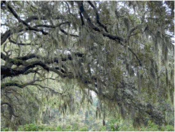 Spanish Moss Landscape Counted Cross Stitch Pattern Chart PDF Download by Stitching Addiction