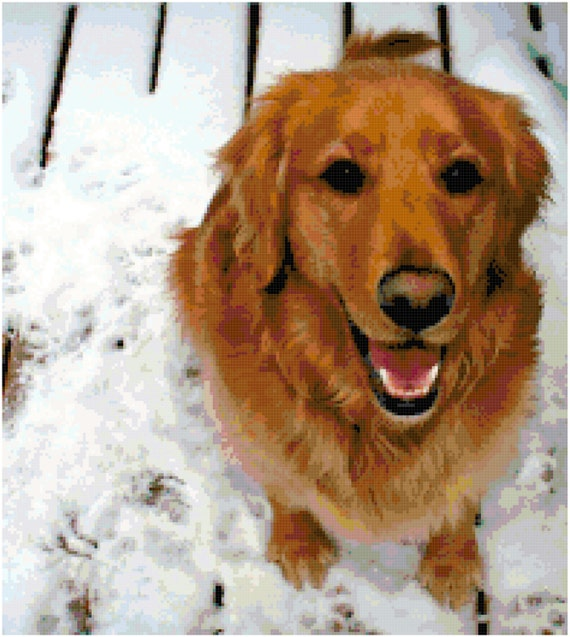 Golden Retriever Counted Cross Stitch Pattern Chart PDF Download by Stitching Addiction