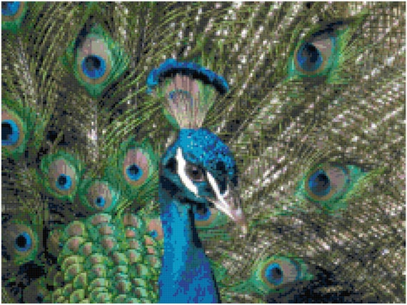 Peacock Close-up Counted Cross Stitch Pattern Chart PDF Download by Stitching Addiction