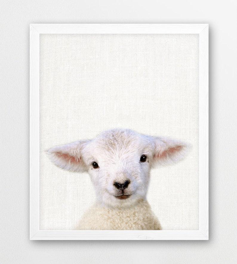 Sheep Lamb Print Farm Animals Photography Cute Baby Sheep