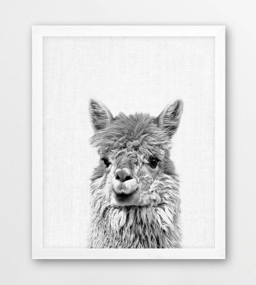 Llama Print Alpaca Lama Photo Cute Animals Black White Etsy