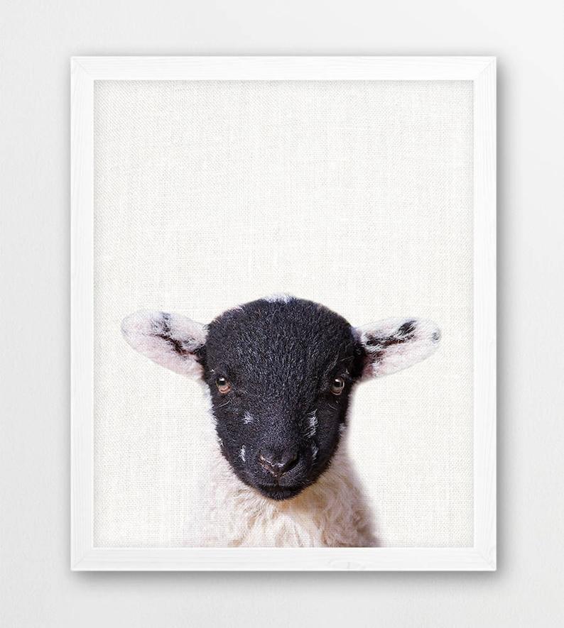 Sheep Print, Farm Animals Photography, Cute Baby Sheep Lamb Photo, Nursery  Animals Printable Wall Art, Animal Color Print, Kids Room Decor