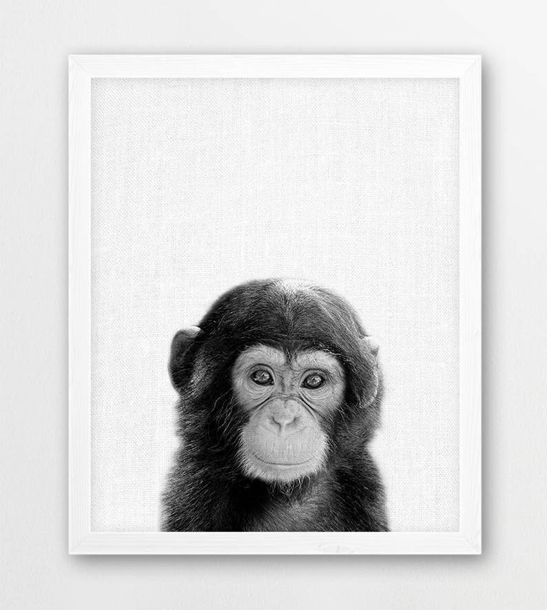 Chimpanzee Print, Cute Baby Monkey Print, African Jungle Animals  Photography, Black White, Nursery Kids Room Animal Wall Art, Animals Photo