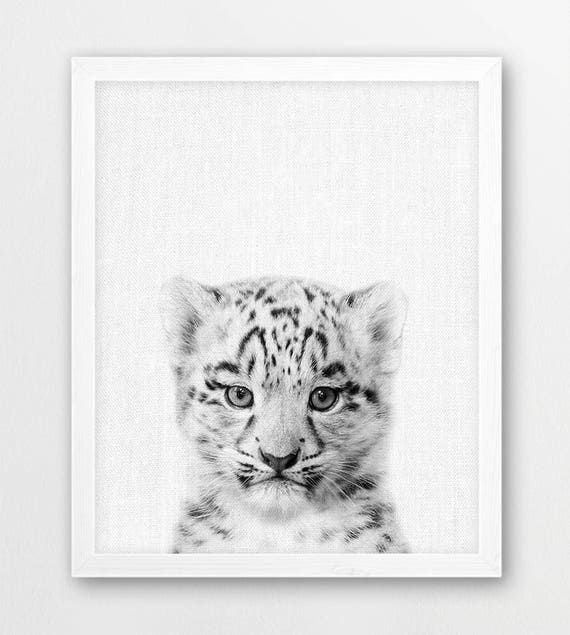 Snow Leopard Print Cute Baby Leopard Cub Photo Print Animals Etsy