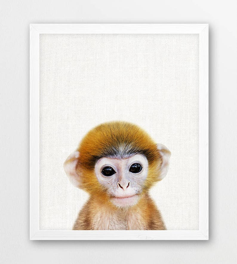 Monkey Print Cute Baby Monkey Photo Animals Art Photo Baby | Etsy