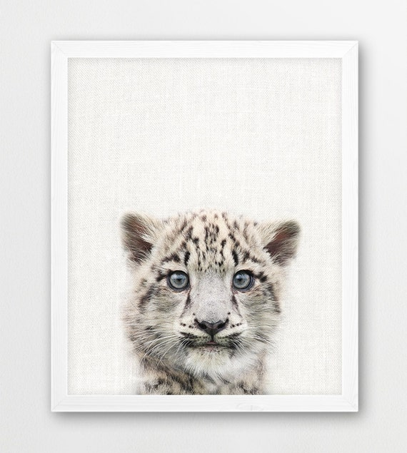 Snow Leopard Cub Print Baby Snow Leopard Photo Mountain Etsy
