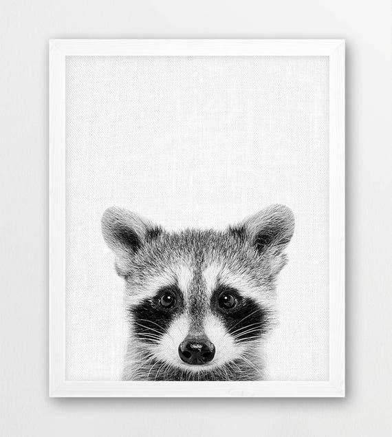 Raccoon Print Cute Baby Raccoon Black White Photo Woodlands