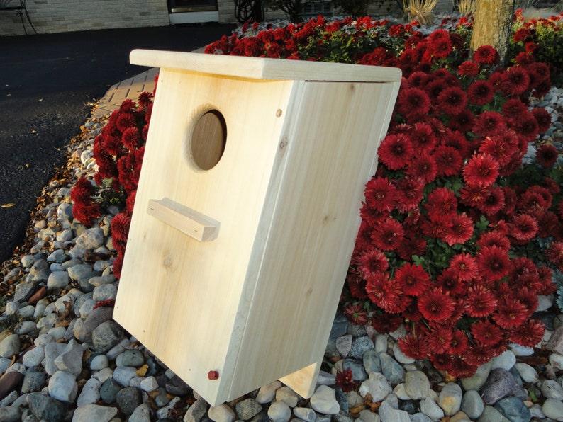 Screch Owl/ Kestrel nest box image 0