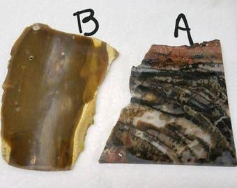 Petrified Wood Lapidary Slab, your choice, large slab