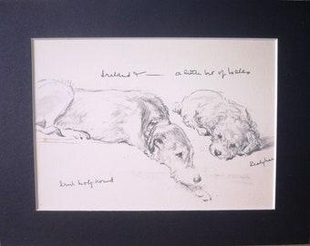 Dog Print-1946-Lucy Dawson-Illustration-Drawing-Old English Sheep Dog-Vintage-Home decor
