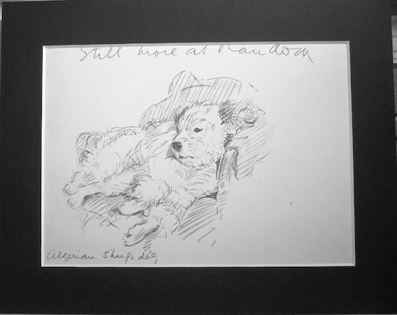 Algerijnse Herdershond Vintage Gemonteerd 1936 Mac Etsy