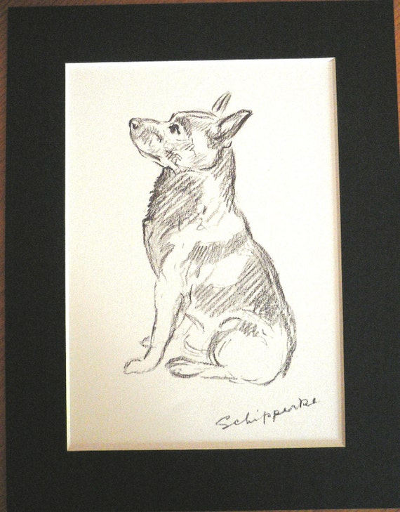 IRISH SETTER DOG ON CHAIR SKETCH PRINT by MAC LUCY DAWSON MOUNTED