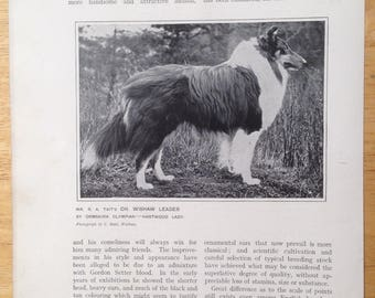 COLLIE SHEEPDOG Antique Dog lithograph print 1907 Robert Leighton show dogs Cassells Co London Christmas Thanksgiving Birthday present