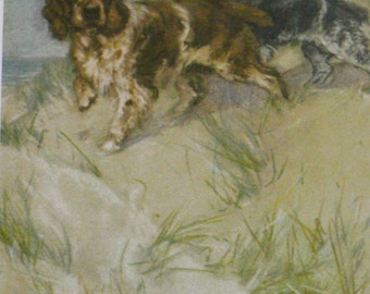 1947 SPANIELS Vintage signed original Vernon Stokes mounted dog bookplate print Unique gift