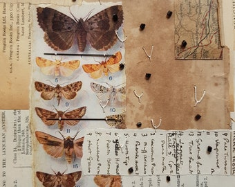 ART COLLAGE Lepidopterology theme