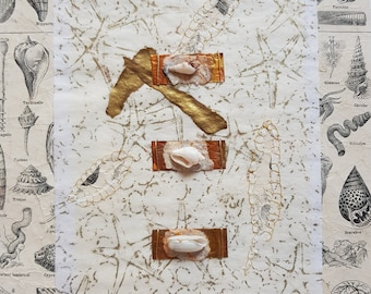 BEACH COMBING COLLAGE with shells, starfish drawing with illustrated fossils and shells