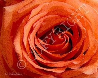ROSE-- 10 x 8 digital print