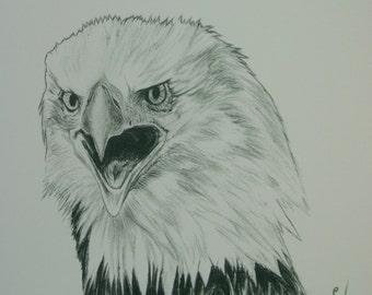 Signed Wildlife Print - American Bald Eagle # 2