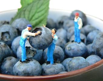 Blaumänner – Foto auf Holz