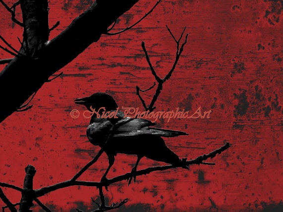 Black Crow Bird Private Investigation Fantasy Home Decor Matted Picture USA A737